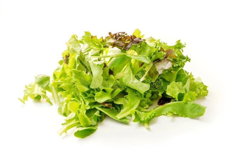 Insalata mista verde con la foglia rossa dell'insalata di razzo e della lattuga fotografia stock libera da diritti