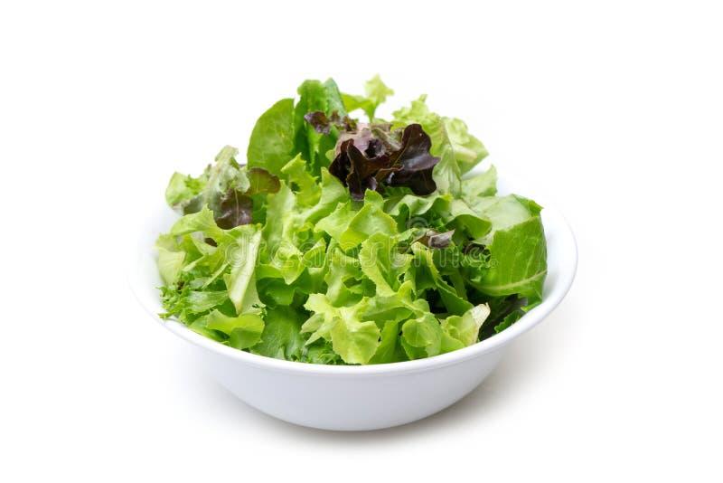 Insalata mista verde con la foglia rossa dell'insalata di razzo e della lattuga fotografie stock