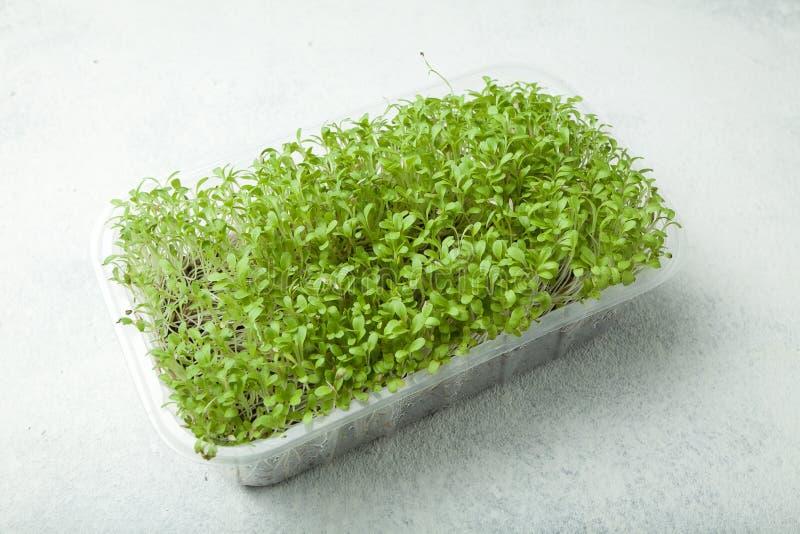 Insalata organica della lattuga dei germogli per alimento in un contenitore d'imballaggio su un fondo bianco immagine stock