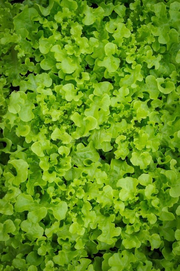 Insalata Veg fotografia stock