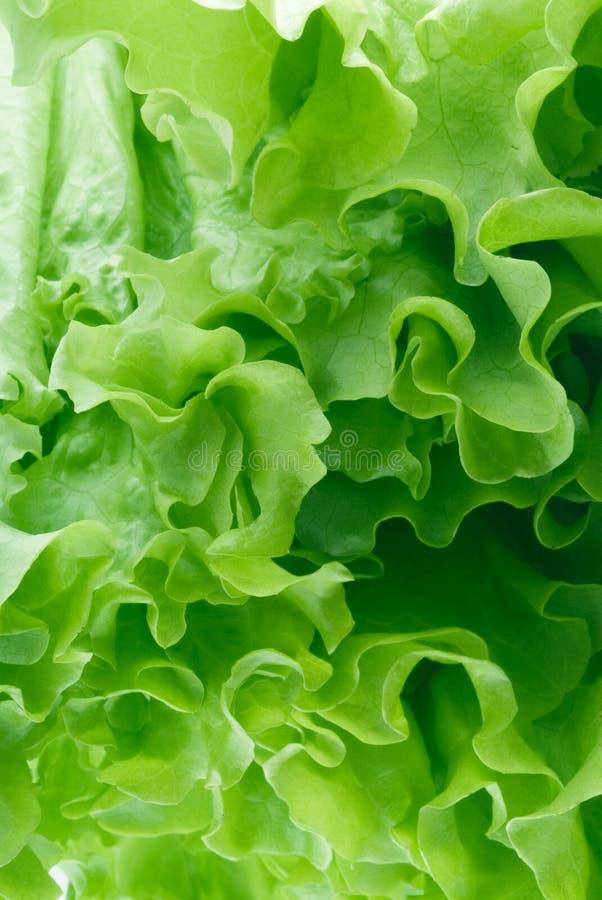 Insalata verde immagine stock libera da diritti