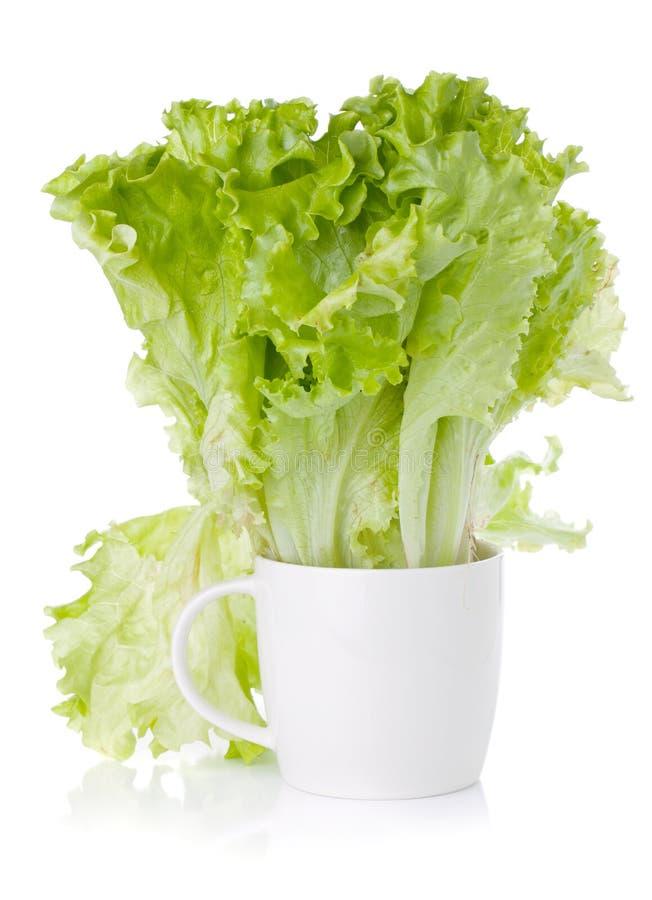 Insalata verde della lattuga di freschezza in tazza fotografie stock