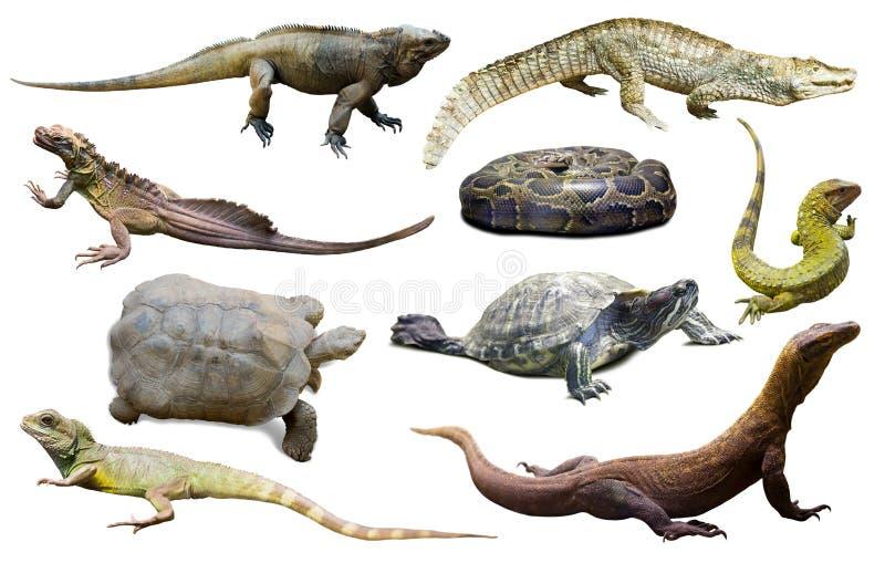 insamling av reptiler arkivfoto
