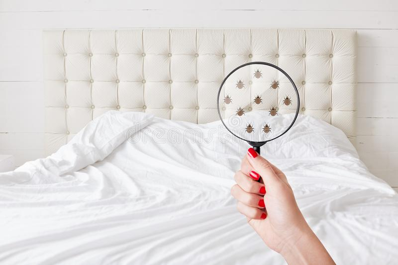 Insanitation concept. Woman holds lens, shows there are bugs in bedclothes, detects bad insects demonstrates dirty conditions. Dir royalty free stock image