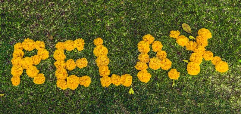 Inschrijving het ontspannen op het gras met gele bloemen royalty-vrije stock foto