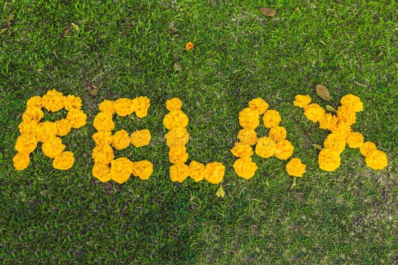 Inschrijving het ontspannen op het gras met gele bloemen royalty-vrije stock afbeelding