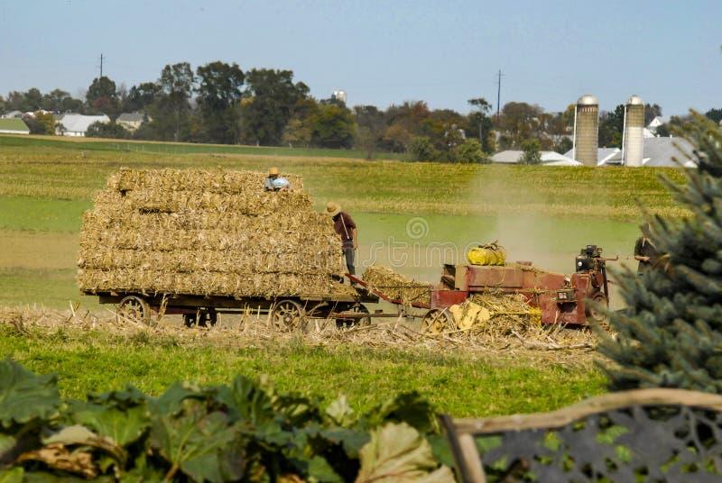 Inscreva a família de Amish que colhe os campos em Autumn Day pinta 2 imagens de stock royalty free