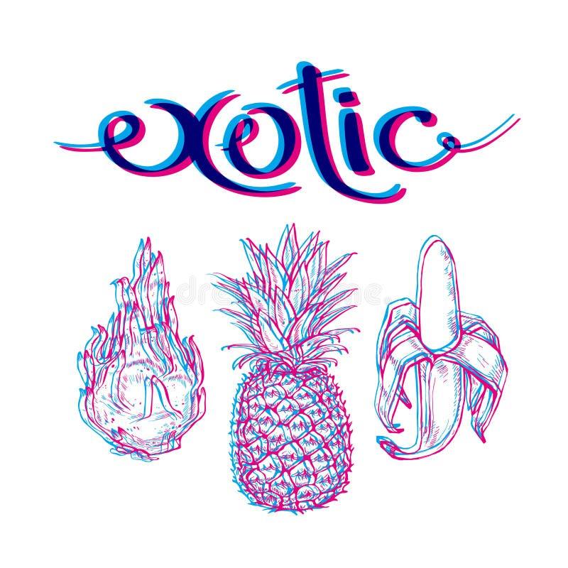 Inscripción exótica de las frutas y verduras Dragonfrut, piña, plátano El gráfico linear, elementos para su diseño ilustración del vector