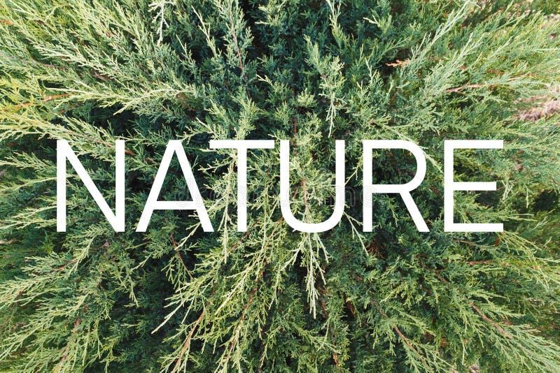 """Inscription """"nature """"sur le fond d'une plante verte vivante illustration de vecteur"""