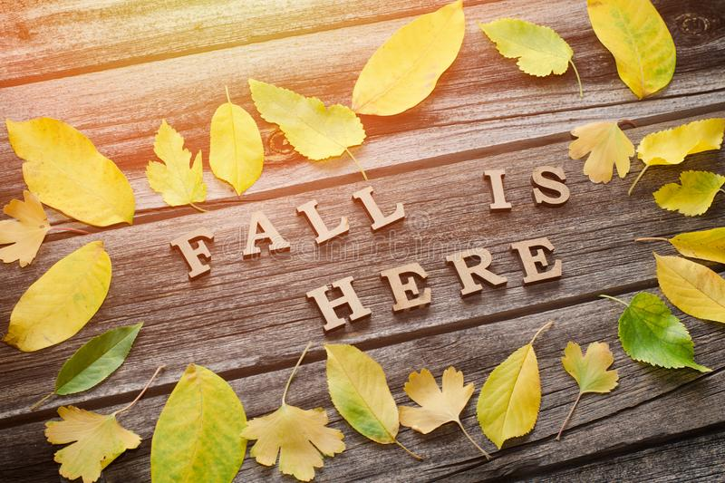 Inscription. Fall is here in wooden letters. Frame of yellow leaves, wooden background.  stock photos