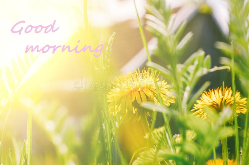 The inscription good morning in the photo with yellow dandelions and green grass in sunlight against a village house. Sunny summer or spring morning royalty free stock photos