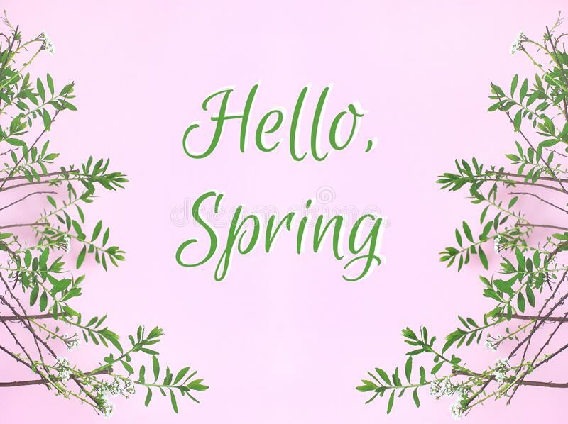 The inscription Hello, spring. delicate little white flowers and green leaves on a pink background.  stock photography