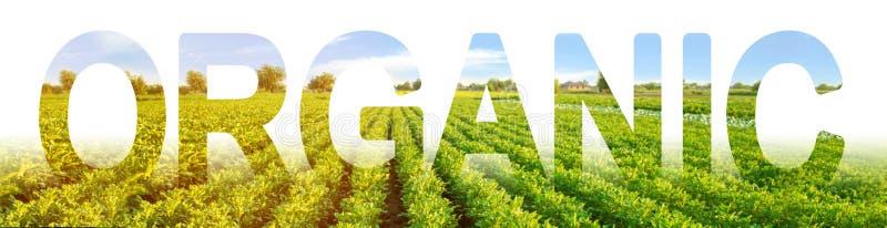 inscription organique sur le fond d'un champ de plantation de pomme de terre Agriculture dans des secteurs écologiquement propres photo libre de droits
