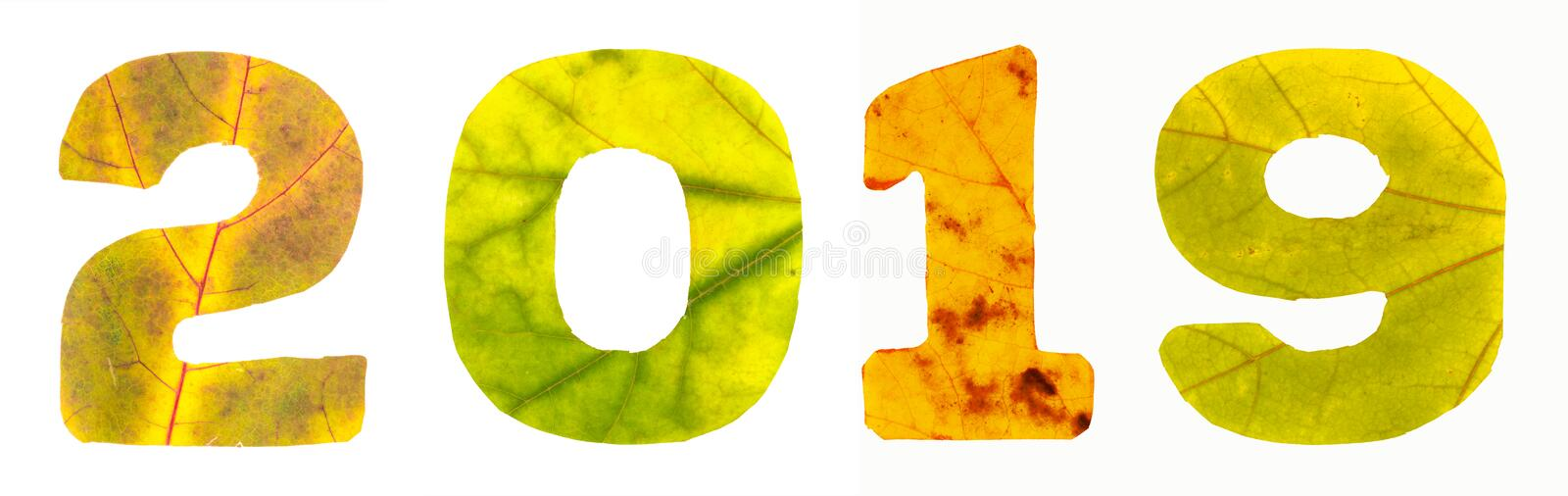 2019 inscription which is composed of the digits carved of autumn leaves vector illustration