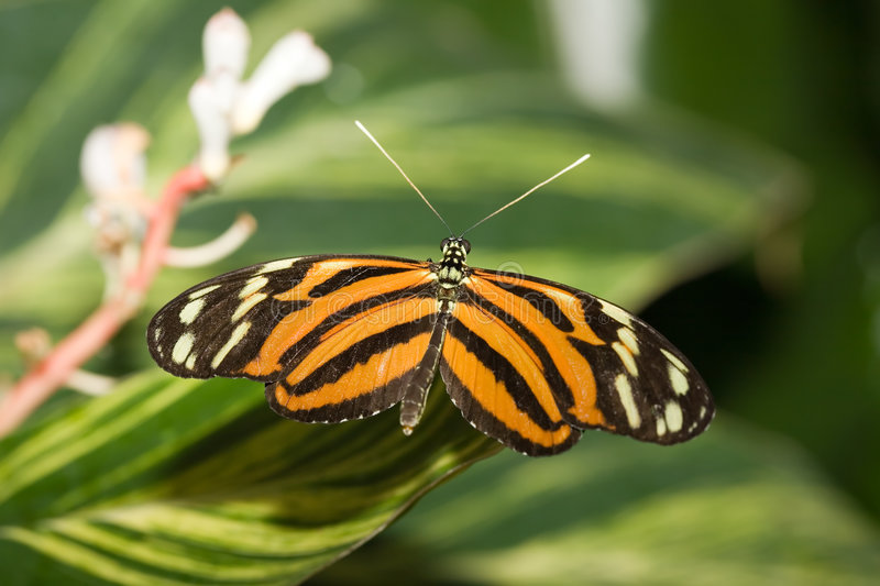 Download Insect 008 butterfly stock image. Image of branch, flora - 480573