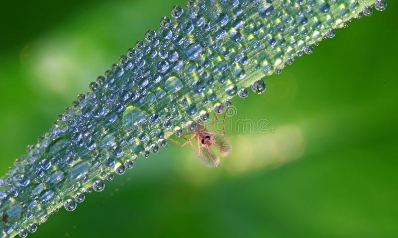 Download Insect stock image. Image of drops, zoology, closeup - 10812735