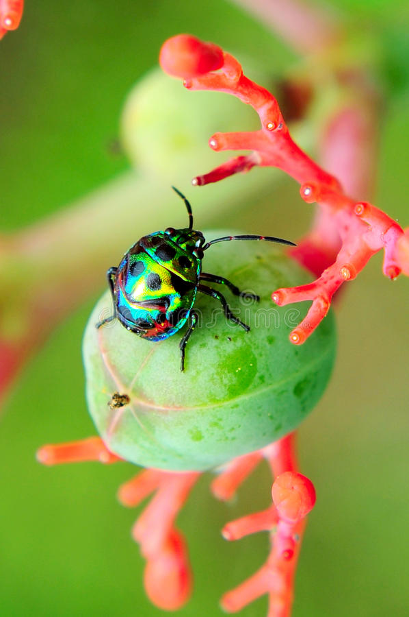 Free Insect Stock Image - 10867481