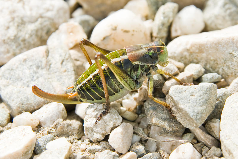 Download Insect stock image. Image of animal, mountain, creature - 18182007