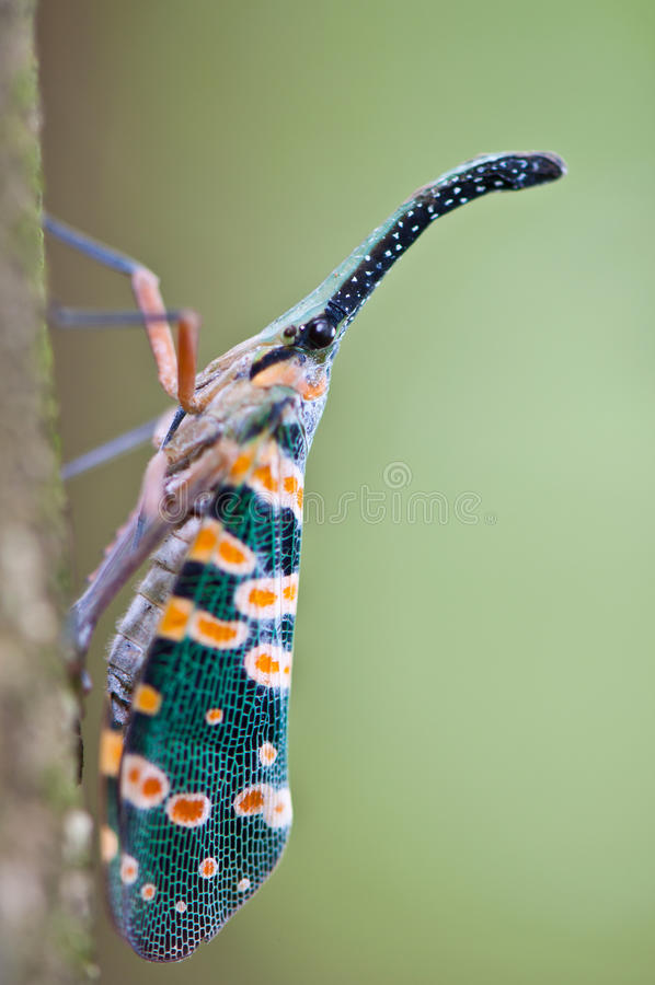 Insect stock image