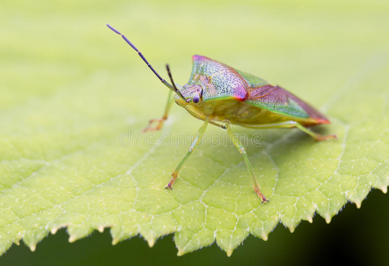 Insect royalty-vrije stock afbeelding
