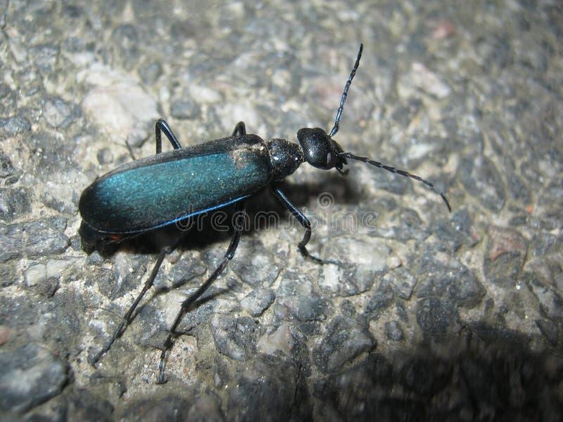 insect royalty-vrije stock fotografie