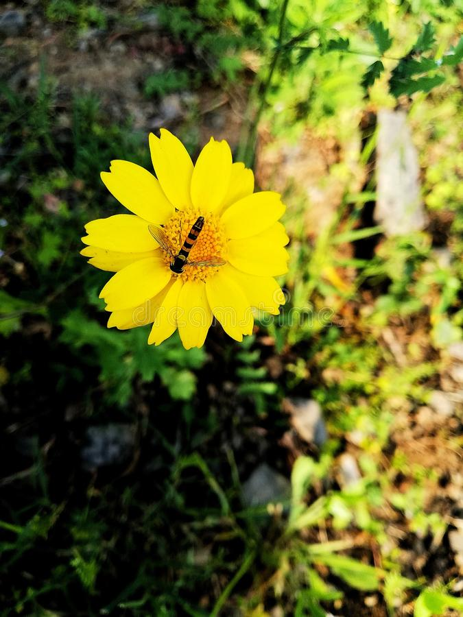 The insect sucks from a beautiful flower. Insect  beautiful flower sucks plante petals nature stock photography