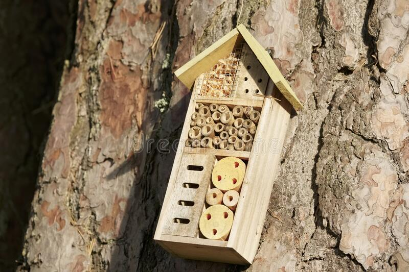 Insect and bee wooden nest house box on tree trunk outdoors. Uk royalty free stock photography