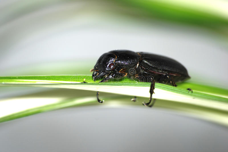 insect beetle on leaf stock images