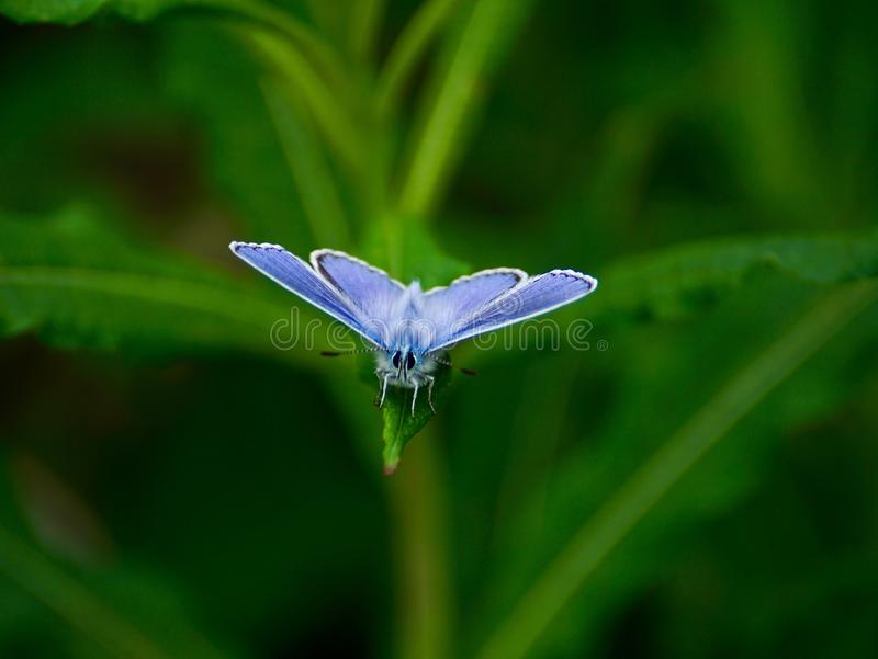 Insect, Blue, Moths And Butterflies, Butterfly Free Public Domain Cc0 Image