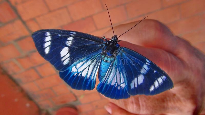 Insect in Bolivia, south America. stock photo