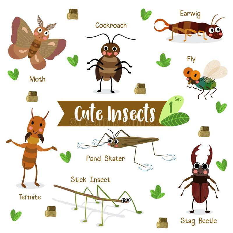 Free Insect Bug Animal Cartoon On White Background With Animal Name. Vector Illustration. Set 1 Royalty Free Stock Photography - 187660797