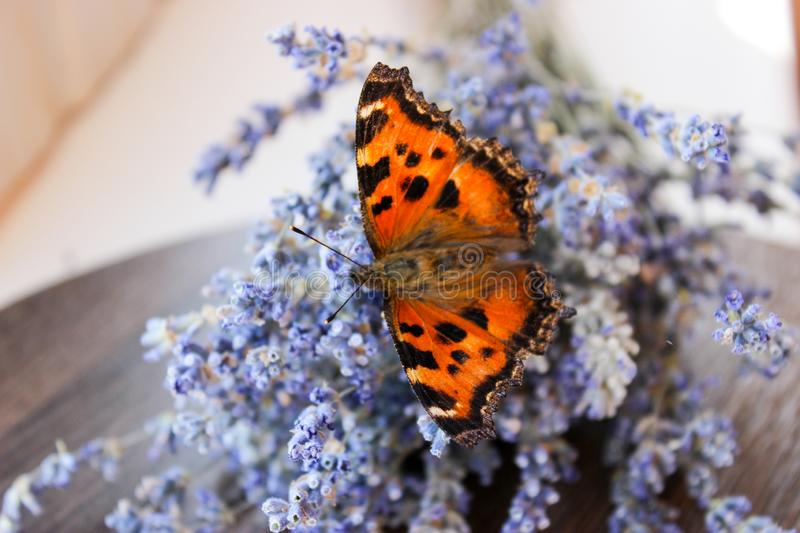 Insect butterfly hive stock photography