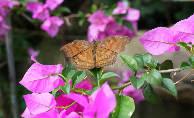 Insect, Butterfly, Moths And Butterflies, Pink stock photos