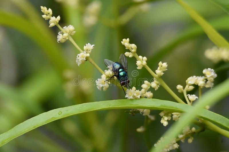 This green insect is called a fly that is perched on a green flower between leaves. This insect is called a wasp which has a poisonous sting with a brown body stock photos