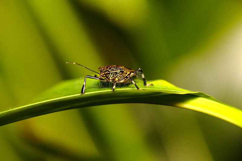 Insect On Leaf Stock Photography