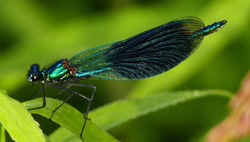 Insect, Damselfly, Dragonflies And Damseflies, Dragonfly Free Public Domain Cc0 Image