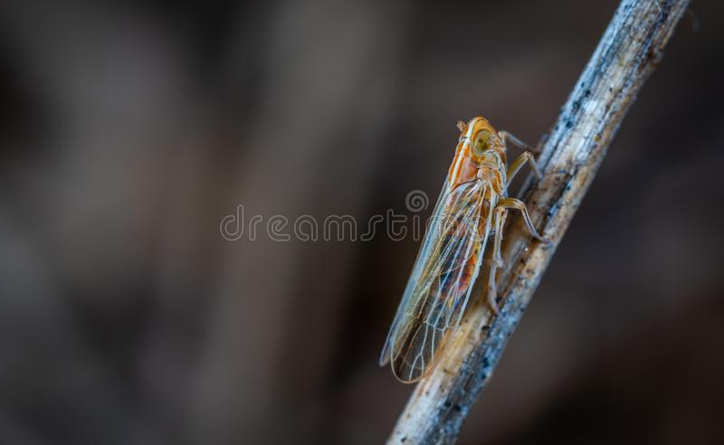 Insect, Damselfly, Dragonfly, Macro Photography stock photo