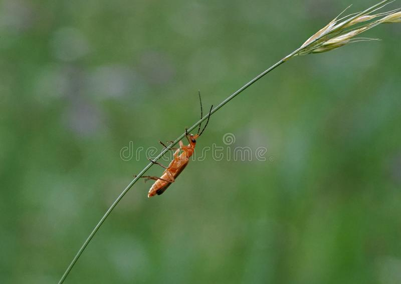 Insect, Damselfly, Invertebrate, Fauna stock images