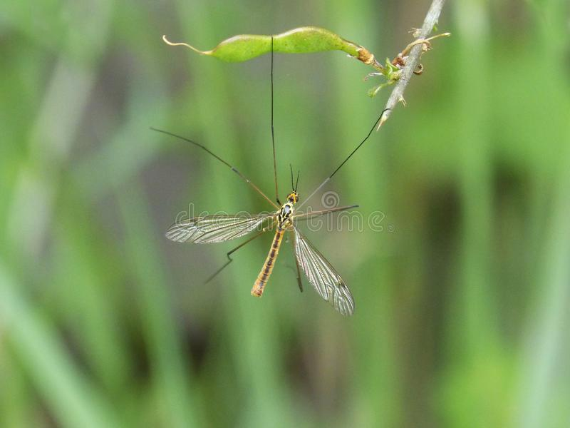 Insect, Damselfly, Invertebrate, Grass royalty free stock photography