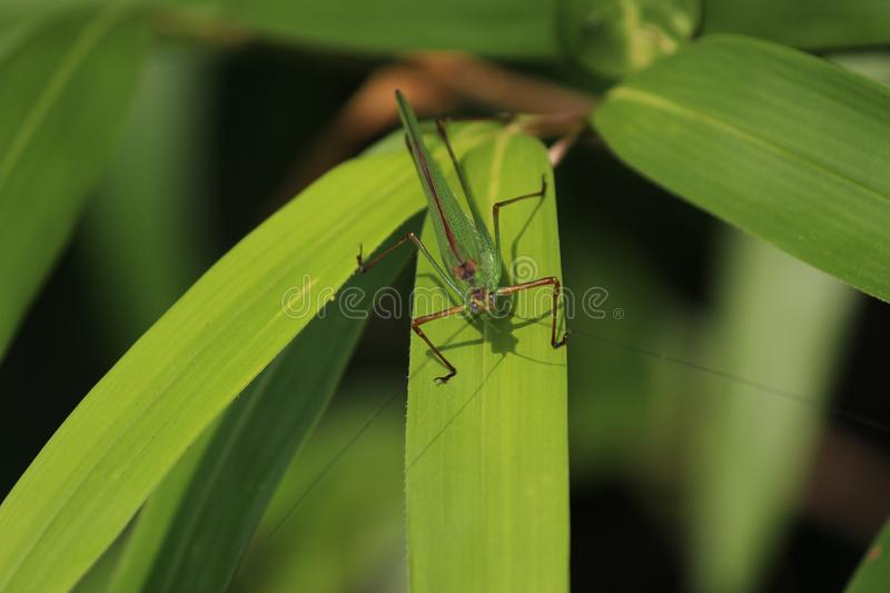 Insect, Damselfly, Invertebrate, Leaf royalty free stock photos
