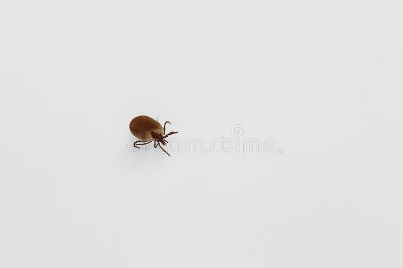 Insect Dangerous in Summer stock images