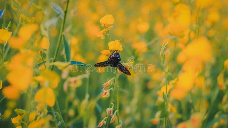insect in de tuin stock fotografie