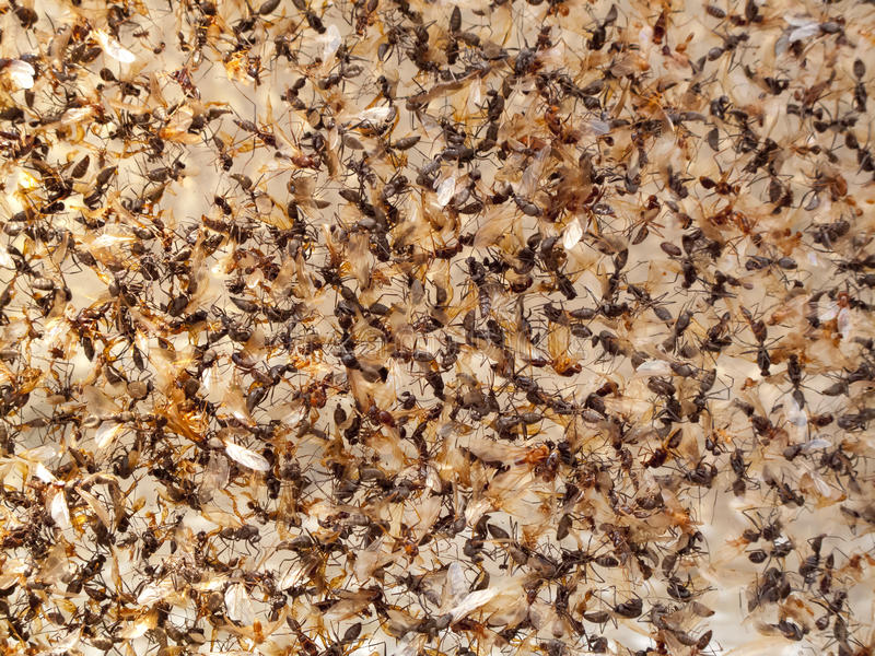 Download Insect dead stock image. Image of home, nature, creature - 24734209