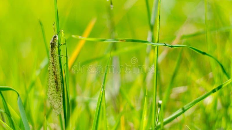 Insect dichte omhooggaand op het groene gras royalty-vrije stock fotografie