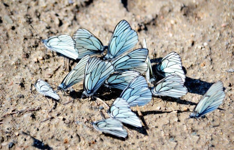 Insect door klep en hout stock fotografie