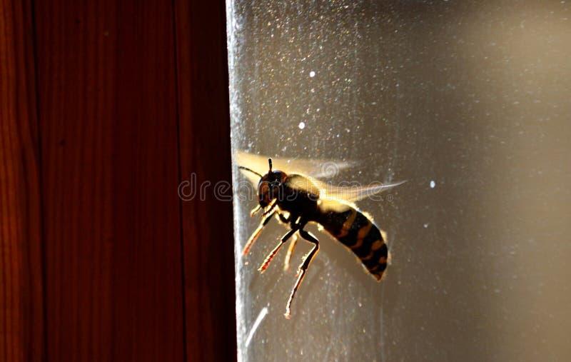Insect door klep en hout royalty-vrije stock afbeelding