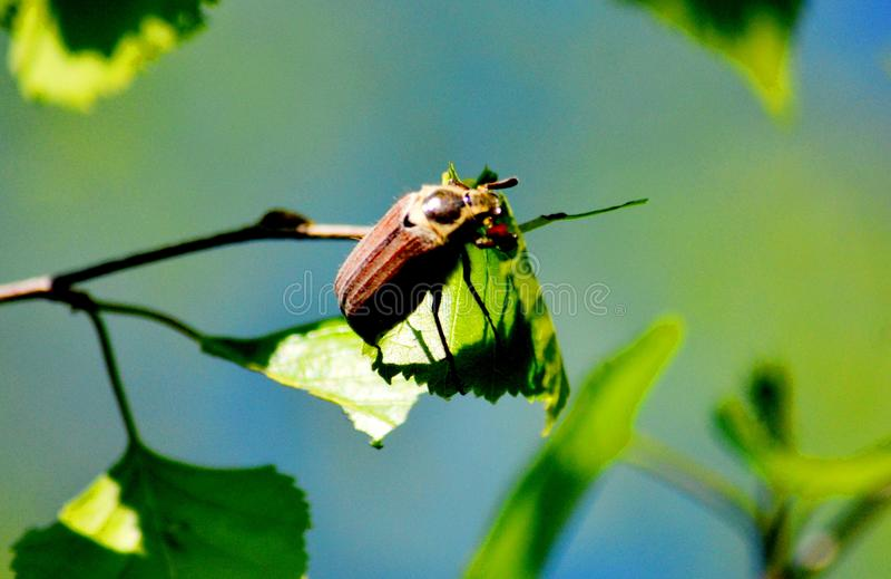 Insect door klep en hout royalty-vrije stock foto's