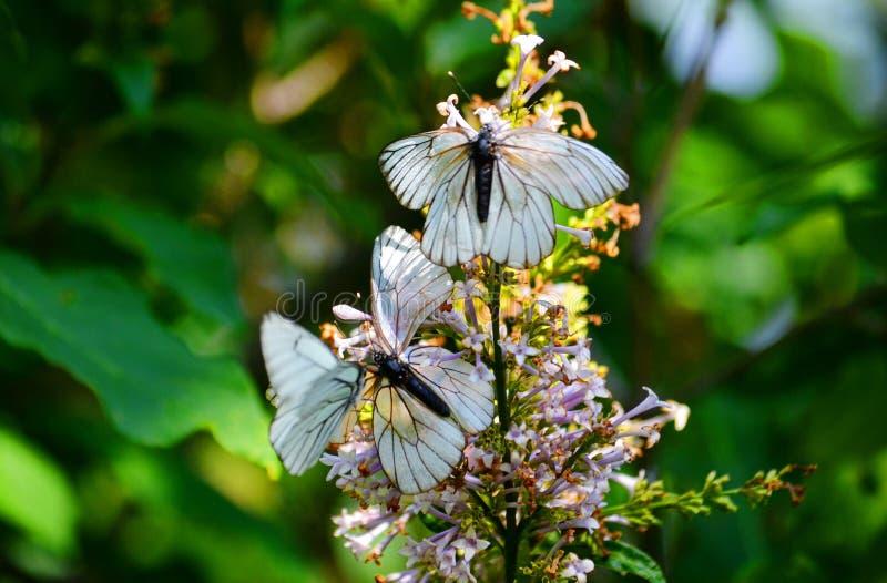 Insect door klep en hout royalty-vrije stock afbeeldingen