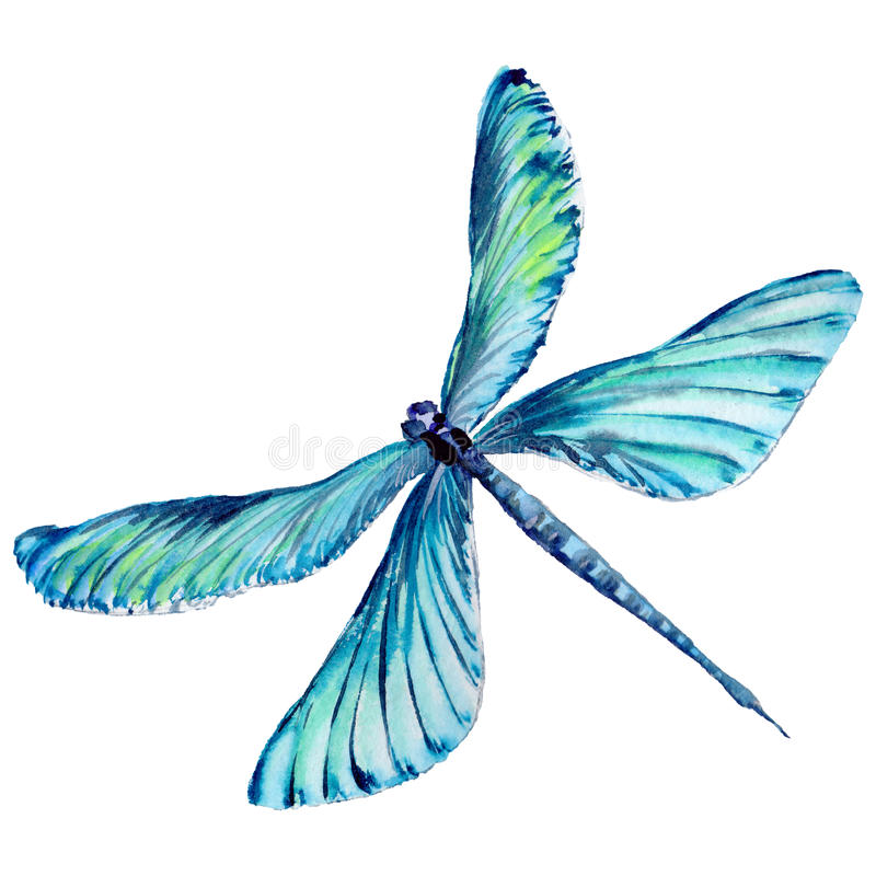 Free Insect Dragonfly In A Watercolor Style Isolated. Stock Photo - 93818220