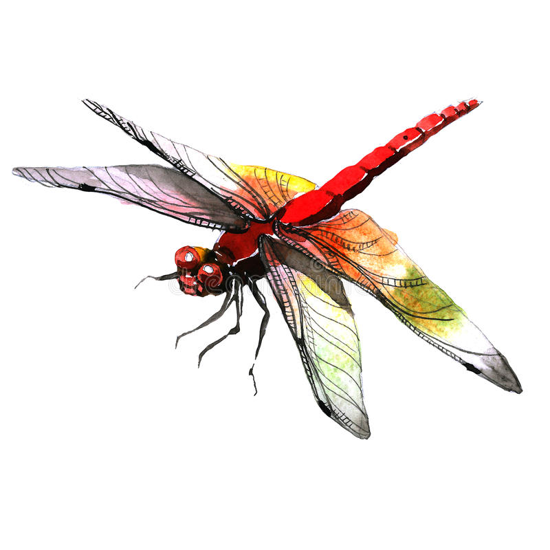 Free Insect Dragonfly In A Watercolor Style Isolated. Royalty Free Stock Photo - 94903225